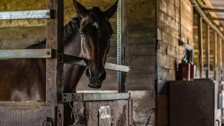 3 tips voor het kopen van geschikte paardenspullen voor jou en je paard